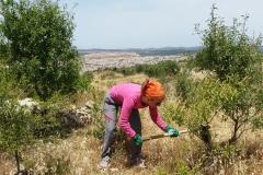 Bonifica del terreno con sfondo insediamenti