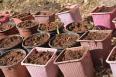 semina in vasetti di yogurt riciclati