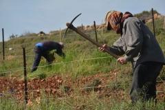 Lavoro nei campi in primavera