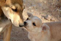 Amorevoli cani da guardia