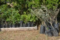 Zona delle piante pronte per la messa a terra
