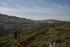 Coltivazione a terrazza su sfondo di insediamenti