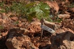 Il risultato delle donazioni: vite piantata con scritta del nome e provenienza del donatore