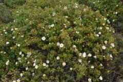 In primavera: esplosione di fiori