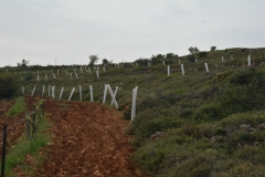 Sistema di protezione per le giovani piante
