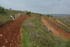 Un'altra zona con coltivazione a terrazza